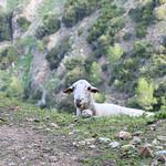 MMB_6108 thumbnail