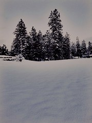Tb to when there was snow. (audreycurtis125) Tags: winter bw white snow black converse 2016