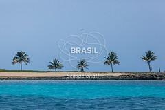 NE_Abrolhos0067 (Visit Brasil) Tags: horizontal brasil fauna natureza bahia nordeste ecoturismo externa abrolhos semgente diurna