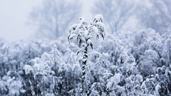 2016-01-21_06-47-20 (wiktor_furmaniak) Tags: winter snow 50mm minolta sony passionphotography naturecollection simplysuperb naturecomposition absolutelyperrrfect flickrunitedaward alpha65