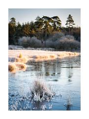 Frozen Pool (matt_smart) Tags: trees winter mist landscape frost somerset mendiphills stockhill mattsmart