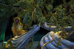 Bellagio_Chinese New Year-5 (Swallia23) Tags: las vegas flowers money hotel peach chinesenewyear casio nv bellagio yearofthemonkey 2016 conservatorybotanicalgarden
