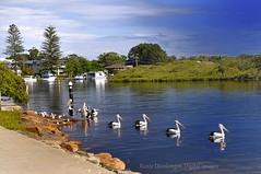 _DSC0515WM (Ranie D) Tags: marina boat australia pelican nsw teagarden cpl yatch nd4 nikon1755f28 nikond90