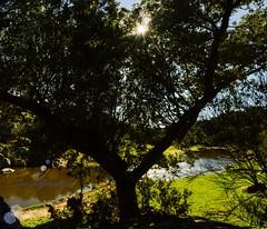 Ledesma (Soniia Gonzlez) Tags: sol rio landscape arbol campo febrero calor