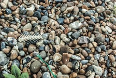 Bones (Kirsty Ann Photography) Tags: city uk travel sea england fish english beach port photography seaside fishing nikon pebbles pebblebeach bone hastings eastsussex fishbone travelphotography fishingport nikond40x