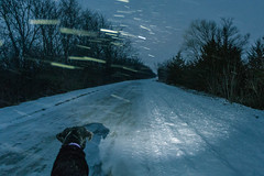 Snowy High Trestle Trail (Tony Webster) Tags: madrid winter dog snow us unitedstates iowa headlamp blowingsnow boonecounty uprr cortana desmoinesrivervalley centraliowa hightrestletrail hightrestlebridge hightrestletrailbridge hightrestle