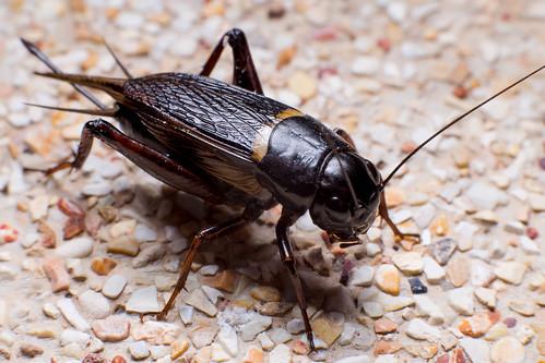 Bug in Hua Hin