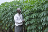 Researcher in cassava field (IITA Image Library) Tags: cassava iita manihotesculenta weedscienceproject