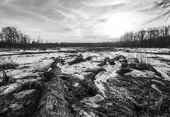 The path to the swamp (IrishRedBeard) Tags: usa northamerica blacknwhite naturalarea 2016