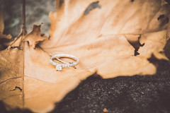 Lindsey's Engagement Ring shot 5 (Devin Andrew Buenger) Tags: new wedding light orange plants usa white color macro art texture nature leaves gardens america devin lens fun botanical outdoors effects happy design leaf engagement interesting birmingham nikon colorful flickr pretty natural outdoor united alabama january inspired style jewelry andrew ring depthoffield tokina adobe states coleman nikkor matte lightroom 2016 d600 buenger