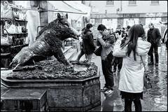 Desiderio- Wish (Andrea Bosio Photographer) Tags: bw italy white black florence blackwhite italia fuji bn firenze wish statua biancoenero turisti porcellino desiderio desideri xpro1 fujixpro1