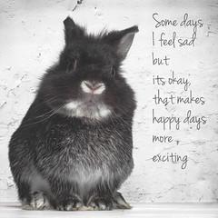 Positive Bunny (Jeric Santiago) Tags: pet rabbit bunny animal happy sad conejo lapin hase kaninchen   rabbitbit