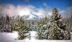 When Snow Falls, nature listens (@ Pam Cahill) Tags: trees winter mountain texture clouds yellowstone