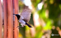Morning visitor (ALL DAY I DREAM ABOUT PHOTOGRAPHY.) Tags: bird window image zoom action ngc astounding flyair astoundingimage nikonflickraward
