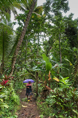 Jungle Umbrella (Warriorwriter) Tags: green water rain stone umbrella wonder day purple cloudy overcast unesco jungle fsm fm basalt monoliths worldheritage micronesia oceania pohnpei nanmadol federatedstatesofmicronesia