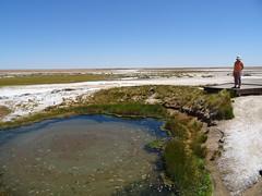 Wabma Kadarbu Springs DSC08737 Sth Australia (Iancochrane) Tags: australia outback southaustralia oodnadattatrack cowardsprings katithanda