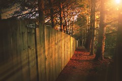 The Wooden Barrier (Amandaclicks) Tags: trees sunset sun sunlight fence landscape outdoors gate bokeh path pineneedles pines rays sunrays
