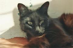 Ellos<3 (Pau Barr) Tags: film cat nikon gato analogica n65 ellos3