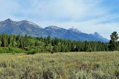 Tetons (Patricia Henschen) Tags: mountain mountains meadow moose jackson wyoming grandtetons tetons preserve naturepreserve sagebrush grandtetonnationalpark laurancesrockefellerpreserve