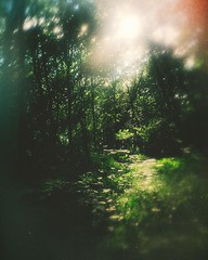 Forest Drinking II (Serg Autumnoff) Tags: green film nature forest 35mm landscape lomography shiny 35 magicforest filmphotography forestclearing ilovefilm ilovegreen filmisnotdead istillshootfilm filmisbetter instagramapp uploaded:by=instagram forestmystery autumnoff