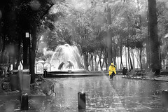 Reto Lluvia -Amarillo- (Alyaz7) Tags: park plaza parque trees blancoynegro rain bike yellow persona lluvia árboles bicicleta gotas amarillo raindrops noise vr coyoacán ruido monocromático colorselectivo rawquality nikond7200 lentenikonnikkorafs1855mm13556giidxvr