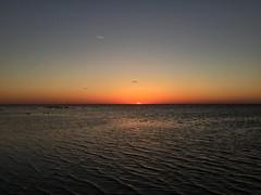 (yomynameiserica) Tags: ocean blue sunset orange black beach gulfofmexico water birds plane pretty florida