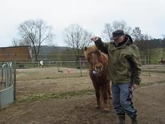 R0026503 (joachimelbing) Tags: mit lustig yoyo spielen pferden yoyogame