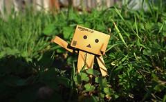 Danbo Adventure (jeffho830) Tags: hello sunshine garden adventure danbo amazoncojp amazonjapan