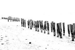 Sticks (wesp2011) Tags: bw byn blancoynegro sticks sand arena palos airelibre moncromtico
