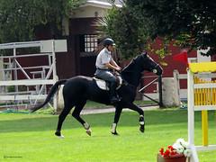 HORSES (Marco San Martin) Tags: horses horse beautiful animals caballo blackhorse horseriding equitacin urbanshot beautifulhorses marcosanmartin