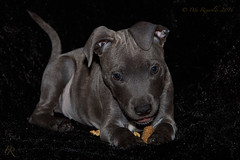Buloo 2 (Pete 5D......) Tags: dawg puppy pup