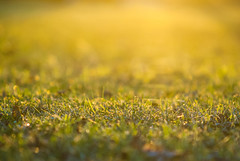 Just grass... (MSC_Photography) Tags: sunset macro up grass germany bayern deutschland bavaria gold evening abend nikon focus warm sonnenuntergang close bokeh low ground level mf gras 28 backlit manual d200 makro f28 nahaufnahme gege ais gegenlicht 135mm boden nahauf