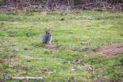 Easter Weekend (Banaham Photography) Tags: camera wild baby cute rabbit bunny animal canon lens mammal photography nikon image wildlife sony young like free fluffy run follow want cropped dslr longer oxfordshire bounce edit blenheimpalace d7100 banaham