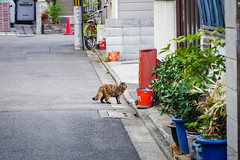 Today's Cat@2016-03-31 (masatsu) Tags: cat pentax catspotting mx1 thebiggestgroupwithonlycats