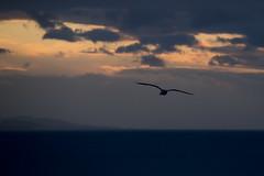 La mar (ramosblancor) Tags: sunset sea costa naturaleza nature birds landscape atardecer coast mar dusk wildlife gulls asturias paisaje aves animales gaviotas cantbrico cantabrian