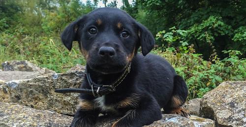 Future guard dog at Bridgetown Priory