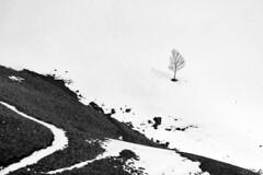 Find the lines (Gi_shi) Tags: bw italy mountain snow mountains tree nikon italia alone bn piemonte neve montagna piedmont bnw biancoenero mottarone nikonitalia iamnikon d7200