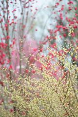 20160403-DSC_5252.jpg (d3_plus) Tags: sky plant flower macro nature rain japan walking nikon scenery waterdrop bokeh hiking drop daily rainy bloom   wildflower tamron  kanagawa   aftertherain dailyphoto    thesedays tamron90mm sagamihara   dogtoothviolet       shiroyama   erythroniumjaponicum   tamronmacro  tamronspaf90mmf28 tamronspaf90mmf28macro11 d700 172e  tamronspaf90mmf28macro nikond700  spaf90mmf28macro11 172en dogtoothvioletvillage