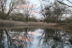 Bume am Ufer (Pascal Volk) Tags: lake reflection tree berlin 50mm spring reflexion spiegelung malchow frhling naturschutzgebiet berlinlichtenberg nsg canonef50mmf25compactmacro neuhohenschnhausen canoneos6d malchoweraue barnimhochflche