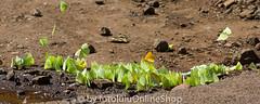 Argentinien_Insekten-69 (fotolulu2012) Tags: tierfoto