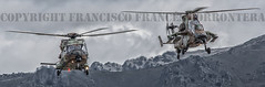 COPYRIGHT FRANCISCO FRANCS TORRONTERA (41) (OROEL (Francisco Francs Torrontera)) Tags: chopper tiger huey helicopter spanish helicopters chinook cougar tigre eurocopter ec135 ch47 ejrcitodetierra uh1 as532 attackhelicopter cargohelicopter ec665tigre ejrcitoespaol uh1h ch47d uh1huey spanisharmy ch47chinook fuerzasarmadasespaolas famet as532cougar ec665 helicoptercrew heavyhelicopter tigrehap spanisharmyhelicopter cougaral ha28hap fuerzasaeromvilesdelejrcitodetierra tigerhap airbushelicopter