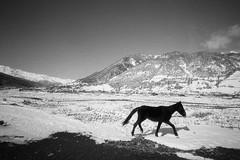 Scan-160420-0011 (Oleg Green (lost)) Tags: travel snow mountains georgia airport bessa super 400 l rodinal fomapan 4515 wideheliar svaneti mestia