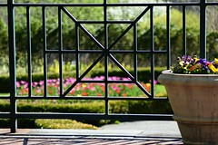 garden gate (heyjudephoto) Tags: nature lines fence garden square spring focus gate soft tulips shapes shape pansies linear