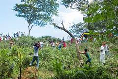 H504_3298 (bandashing) Tags: trees red england people tree green manchester shrine hill crowd foliage sylhet bangladesh socialdocumentary mazar aoa shahjalal bandashing akhtarowaisahmed treecuttingfestival lallalshahjalal