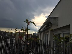 Ciel (stefff13) Tags: soleil ciel nuage villejuif