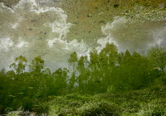 Greenical (andressolo) Tags: trees distortion reflection water clouds ro reflections river agua distorted reflected reflect bosque nubes reflejo rbol reflejos distortions