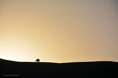 Sunrise   (Hadi Nikkhah) Tags: tree sunrise iran   azarbaijan   takab