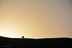 Sunrise طلوع آفتاب (Hadi Nikkhah) Tags: tree sunrise iran درخت تک azarbaijan آفتاب آسمان takab طلوع
