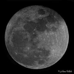 Luna de Navidad (Retratista de paisajes y paisanajes) Tags: textura luna greatshot lunallena abstracto redondo lunar crculo monocromtico fondonegro totalphoto
