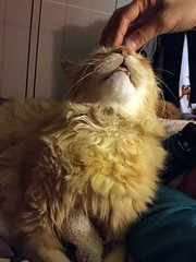 Happy Nobuo (sjrankin) Tags: california family animal northerncalifornia cat edited naomi nobuo 9january2016